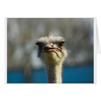 Close_Up_Ostrich_FullSize.jpg Card