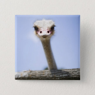 Close up Ostrich head 15 Cm Square Badge