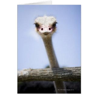 Close up Ostrich head Card