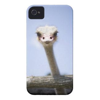 Close up Ostrich head Case-Mate iPhone 4 Case