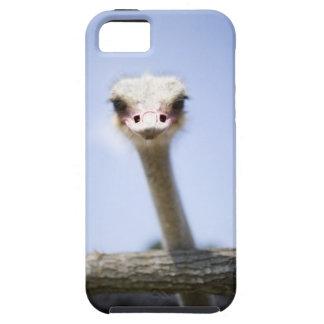 Close up Ostrich head iPhone 5 Case