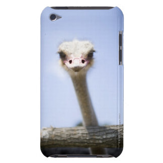 Close up Ostrich head iPod Touch Covers