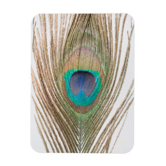 Close Up Peacock Feather Photo Magnet