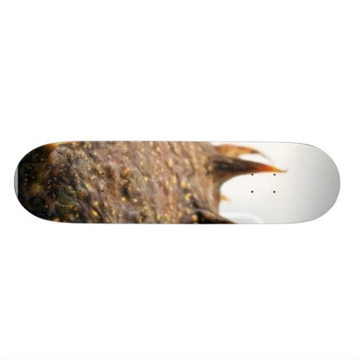 Close Up Photo Of Conker Thorns Skateboard