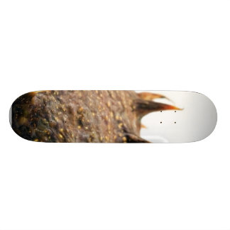 Close Up Photo Of Conker Thorns Skateboards