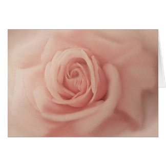 Close Up Pink Rose Cards