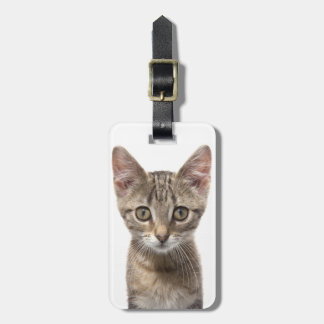 Close up portrait of a kitten luggage tag
