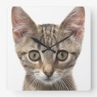Close up portrait of a kitten square wall clock