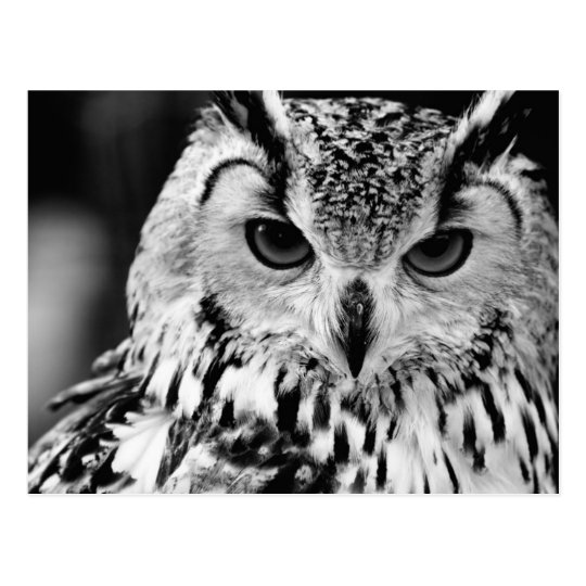 Close Up Portrait Of Eurasian Eagle-owl Postcard
