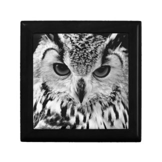 Close Up Portrait Of Eurasian Eagle-owl Small Square Gift Box