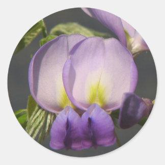 Close-Up Purple Wisteria Round Sticker