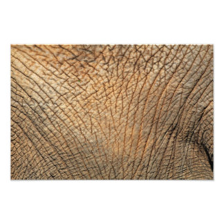 Close-up shot of an Elephant's skin Photograph