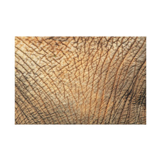 Close-up shot of an Elephant's tough skin Canvas Print