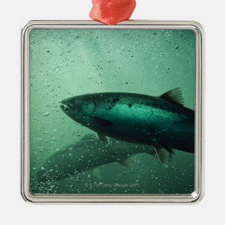 Close up shot of salmon running 2 christmas ornament
