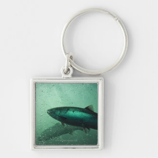 Close up shot of salmon running 2 Silver-Colored square key ring