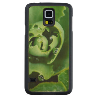 Close-up, succulent plant with water droplets carved maple galaxy s5 case