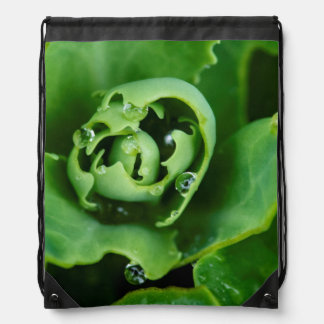 Close-up, succulent plant with water droplets drawstring bag