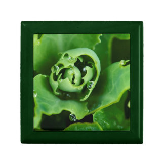 Close-up, succulent plant with water droplets jewelry boxes