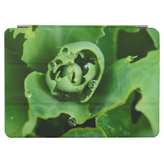 Close-up, succulent plant with water droplets iPad air cover