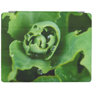 Close-up, succulent plant with water droplets iPad cover