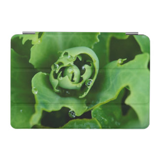 Close-up, succulent plant with water droplets iPad mini cover