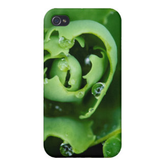 Close-up, succulent plant with water droplets iPhone 4/4S cover