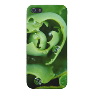 Close-up, succulent plant with water droplets iPhone 5 cases