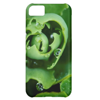 Close-up, succulent plant with water droplets iPhone 5C case