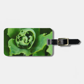 Close-up, succulent plant with water droplets luggage tag