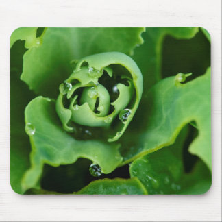 Close-up, succulent plant with water droplets mouse mat