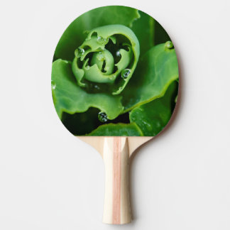 Close-up, succulent plant with water droplets ping pong paddle