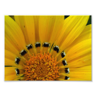 Close-Up Sunflower Photo Print
