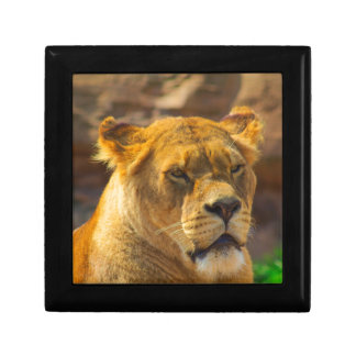 Close_Up_Tiger.jpg Gift Box