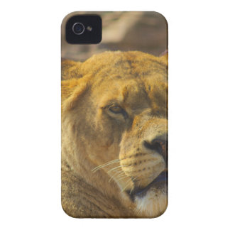Close_Up_Tiger.jpg iPhone 4 Cover