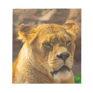 Close_Up_Tiger.jpg Notepad