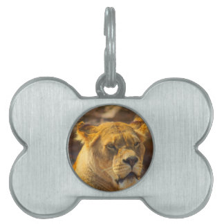 Close_Up_Tiger.jpg Pet ID Tag