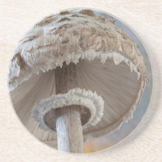 Close-Up Underside Of Mushroom Coaster