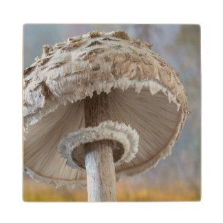 Close-Up Underside Of Mushroom Wood Coaster