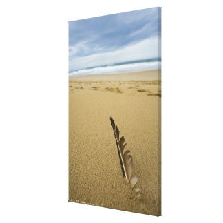 Close-up view of bird feather in beach sand, canvas print