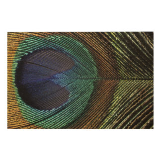 Close up view of eyespot on male peacock feather wood wall decor
