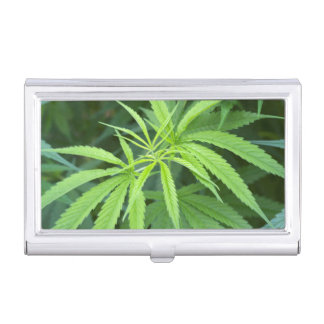 Close-Up View Of Marijuana Plant, Malkerns Business Card Case