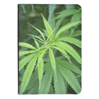 Close-Up View Of Marijuana Plant, Malkerns Kindle Touch Cover