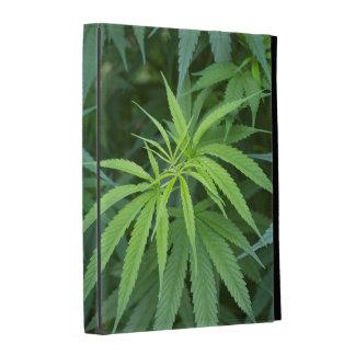 Close-Up View Of Marijuana Plant, Malkerns iPad Folio Cases