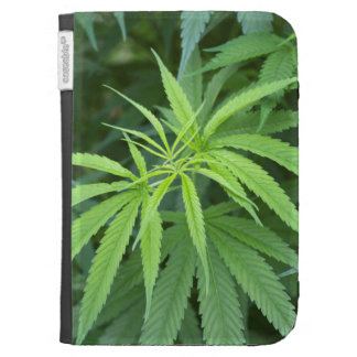 Close-Up View Of Marijuana Plant, Malkerns Kindle Folio Cases