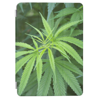 Close-Up View Of Marijuana Plant, Malkerns iPad Air Cover