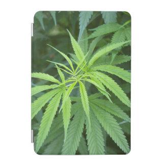 Close-Up View Of Marijuana Plant, Malkerns iPad Mini Cover