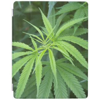 Close-Up View Of Marijuana Plant, Malkerns iPad Cover