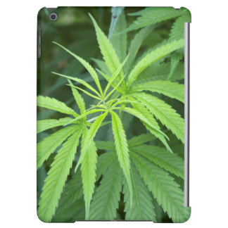 Close-Up View Of Marijuana Plant, Malkerns iPad Air Covers