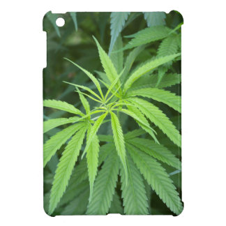 Close-Up View Of Marijuana Plant, Malkerns Case For The iPad Mini