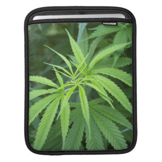 Close-Up View Of Marijuana Plant, Malkerns Sleeves For iPads